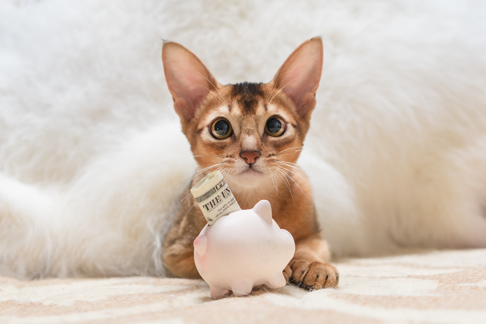 pets and money